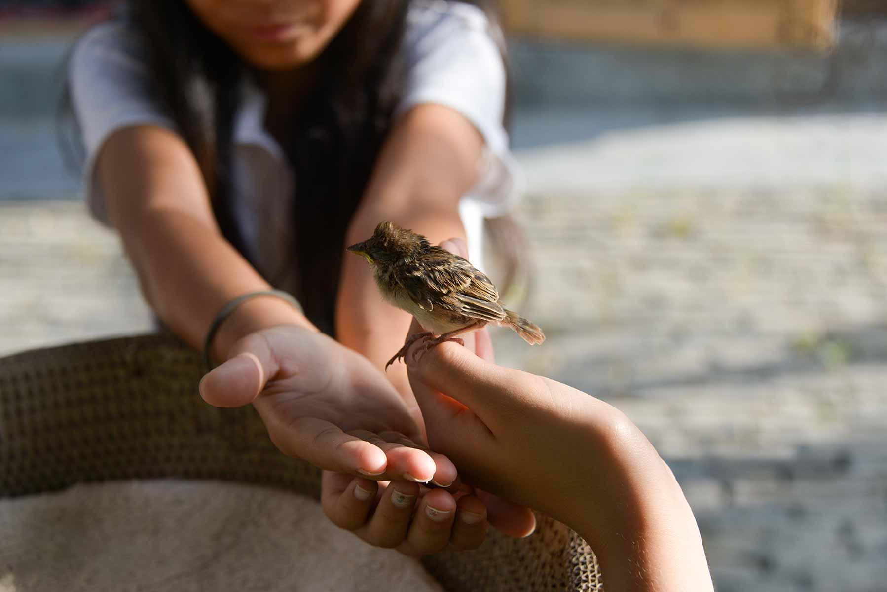 Girl with bird in her hands