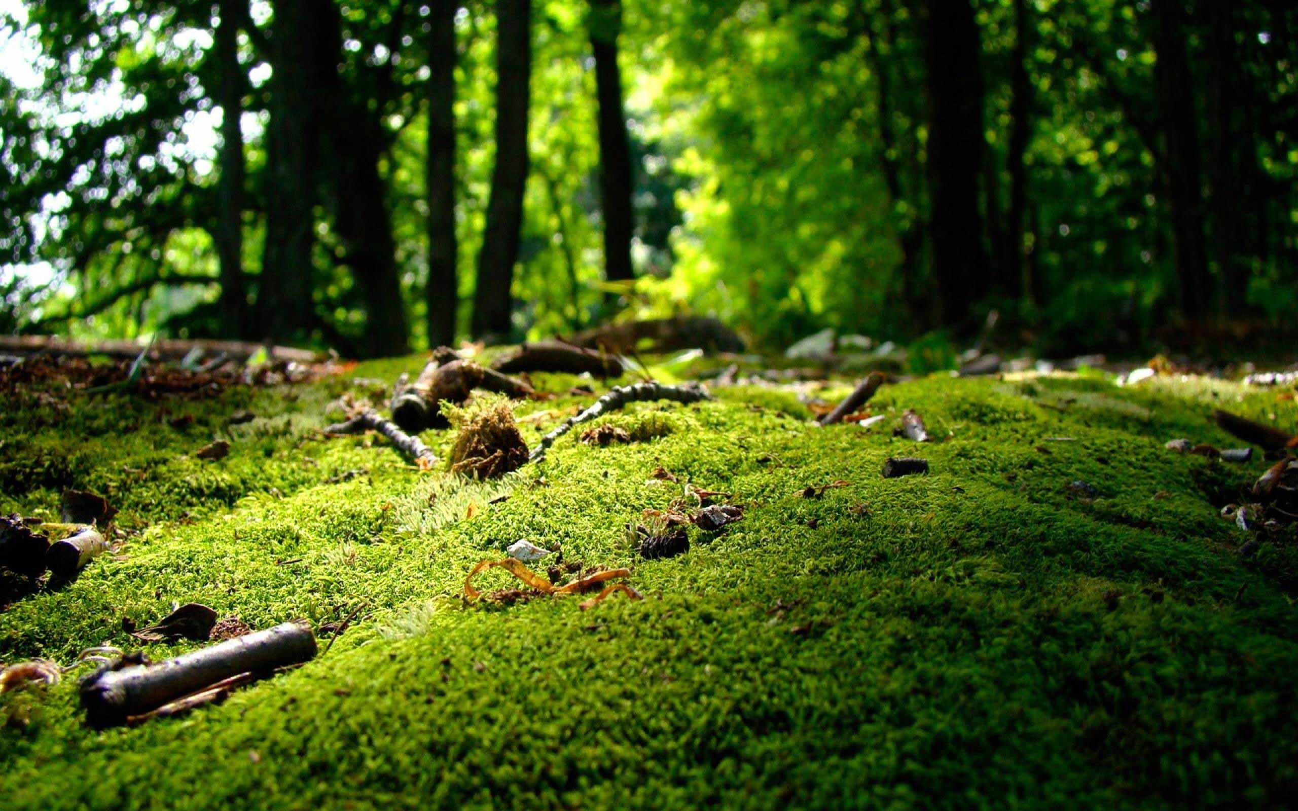 Green moss on forest ground